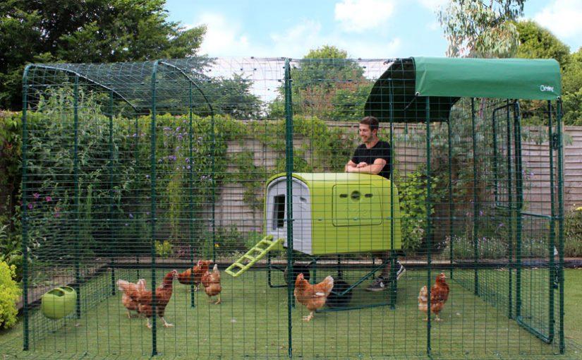 Des conseils pour réussir l'aménagement d'un poulailler dans sa cour
