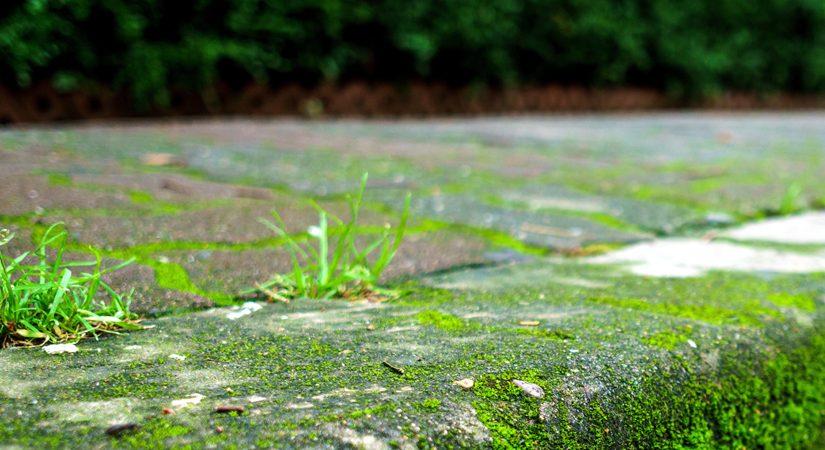 Poser une bordure de jardin en pavés