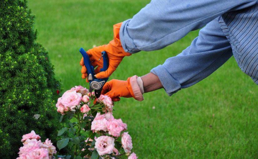 Quelques astuces pour bien entretenir son jardin