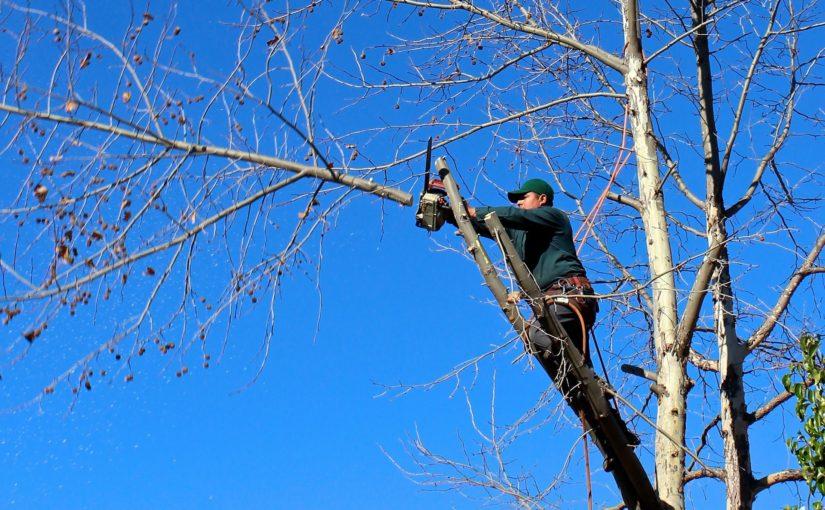 Pourquoi élaguer régulièrement les arbres ?