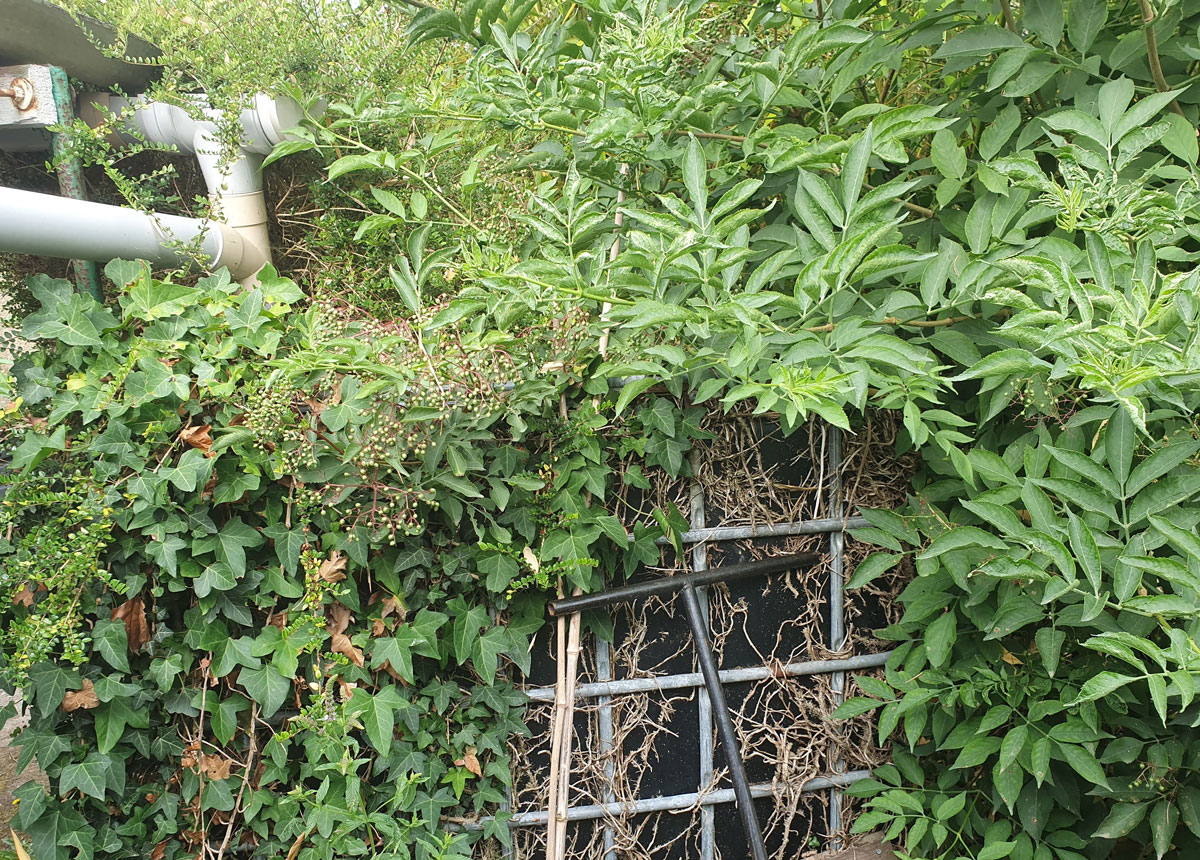 cuve eau pluie jardin cachee branchage