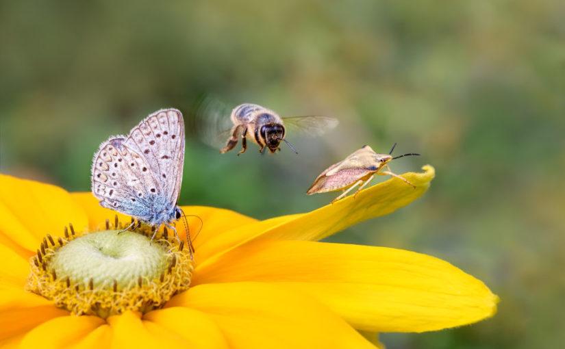 insecte butine biodiversite